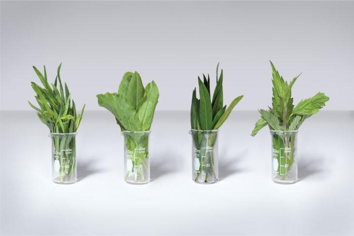 herbs-in-beakers