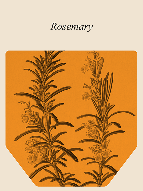 Muses Rosemary