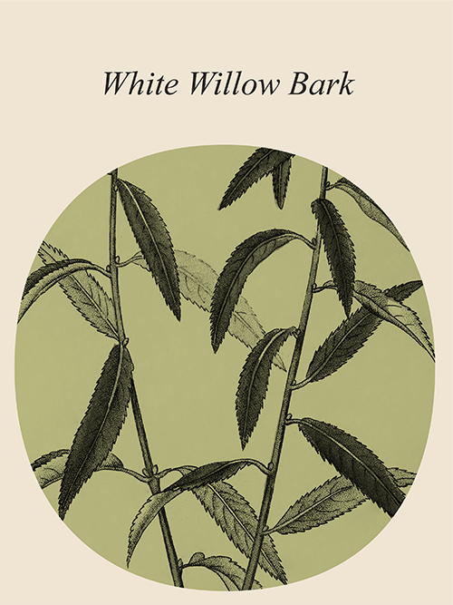 Muses White Willow Bark